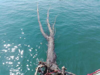 Troben un arbre de 14 metres a mitja milla mar endins a Torredembarra