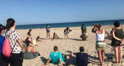 Nova sessió de voluntariat ambiental per la tortuga babaua a la platja d'Altafulla