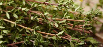 Taller als horts ecològics de Cal Dània sobre les plantes aromàtiques