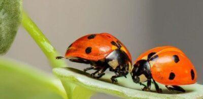 Taller 'Construïm un hotel d'insectes', a la Biblioteca Mestra Maria Antònia el 4 de juny