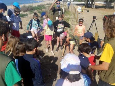 Escolars altafullencs planten vegetació autòctona per reforçar la platja i protegir el Parc de Voramar