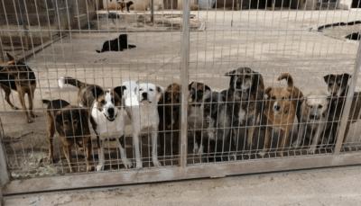 Els Nois de la Torre organitzen una jornada solidària el 4 de juliol en benefici de la Protectora d'animals