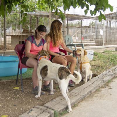 Vint-i-cinc anys cuidant els gossos abandonats