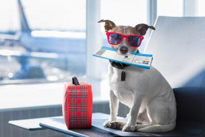 Consells per a viatjar amb la meva mascota