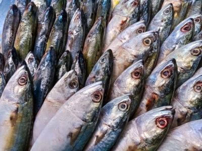 Peix blau, font d'Omega 3